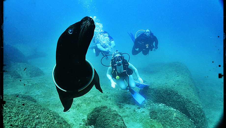 Scuba with Sealions at Caletas