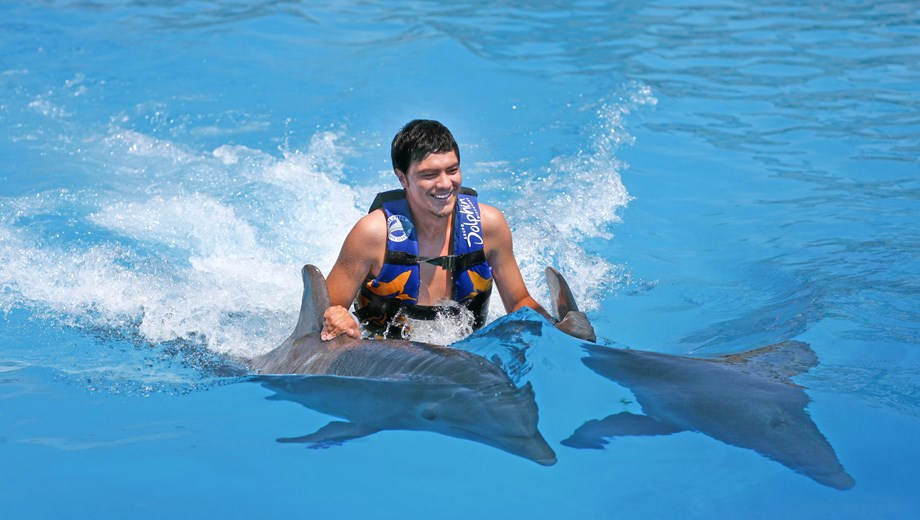 Dolphin Royal Swim